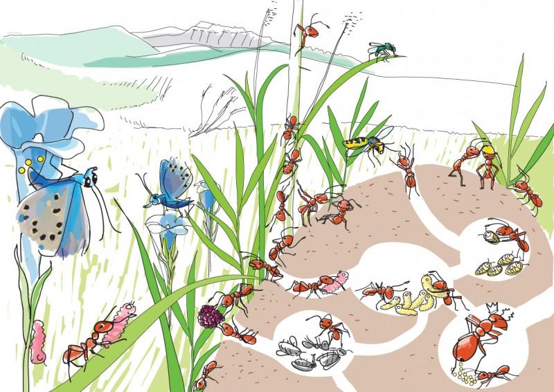 Schaubild Ameisenhaufen in Farbe