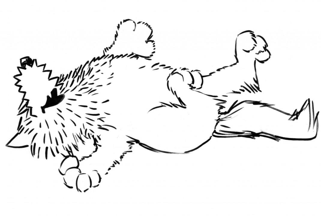 wolfi5
